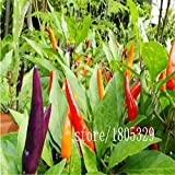 SwansGreen White : Rainbow Chili peppers seeds 100pcs Multi color Pepper seeds Interest Mini Garden Home Plant