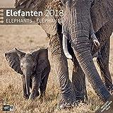 Elefanten 30x30 2018