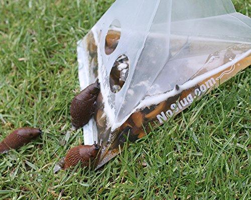 set-of-20-slug-traps-hygienic-disposable-and-environnentally-friendly