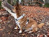 Hundegeschirr mit Dreieck Muster, Gurtband in beige, silber, 40mm