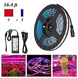 Rokoo Streifen-Licht-Anlage 5M LED Wachsen Wasserdichte Lampe 5050 SMD für Aquarium-Gewächshaus-Anlage-Garten-Blumen
