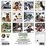 Image de Crusoe the Celebrity Dachshund 2017 Calendar