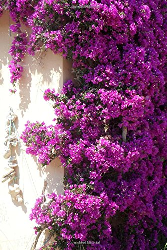 Bougainvillea Flower Journal: 150 Page Lined Notebook/Diary - Bougainvillea Bush