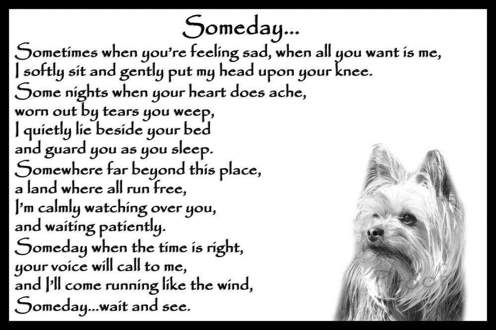 Yorkshire Terrier pet loss memorial bereavement gift – Someday