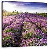 Lavendelfeld Provence, Format: 70x70 auf Leinwand, XXL riesige Bilder fertig gerahmt mit Keilrahmen, Kunstdruck auf Wandbild mit Rahmen, günstiger als Gemälde oder Ölbild, kein Poster oder Plakat