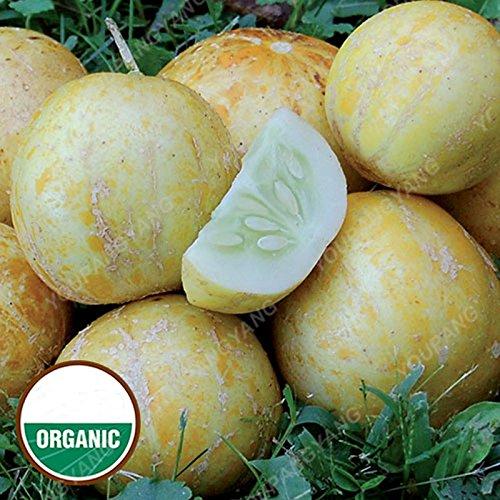 50Pcs concombre ronde rares semences Graines de concombre bio jardin Balcon Bonsai pot de légumes et les graines de fruits Cucumis graines de concombre de semences