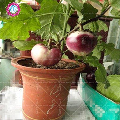 200pcs graines noires Aubergine - diamant Heirloom russe bio légumes semences de plantes non-OGM pour la maison et le jardin 3