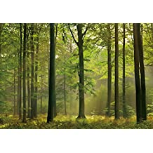 Moods - Fotomural Bosque Otoñal - Tamaño : 366 X 254 cm