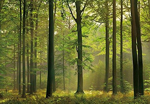 Idealdecor 216 Autumn Forest, 366 x 254 cm - Idealdecor Murals