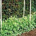 Gärtner Pötschke Ranknetz, 10 x 2 m von Gärtner Pötschke bei Du und dein Garten
