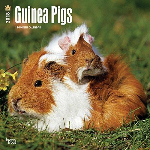 Guinea Pigs 2018 Wall Calendar