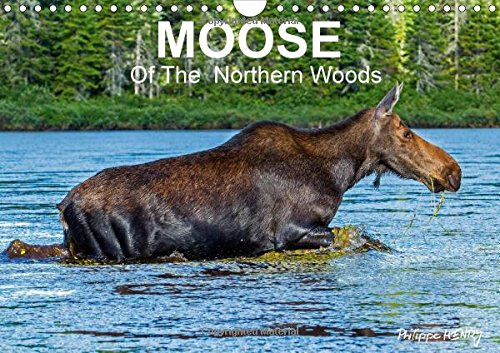 MOOSE Of The Northern Woods 2016: Let's follow the moose of Quebec northern woods. Philippe Henry presents 13 photos of this silent giant. (Calvendo Animals)