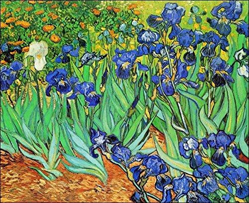 van-gogh-iris-immagine-su-carta-di-spessore-e-di-gr300-cm60x80-cod31117