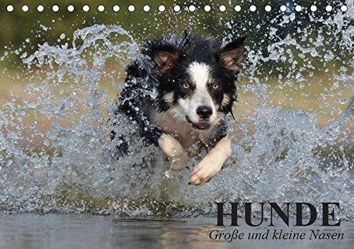 Hunde. Große und kleine Nasen (Tischkalender 2019 DIN A5 quer): Lustige und niedliche Hundebilder zum schmunzeln! (Geburtstagskalender, 14 Seiten ) (CALVENDO Tiere) (Große Labrador-retriever)