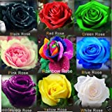 Azalea Gardens Rare Mixed 10 Rose Live Plants Rare Color Rose 10 Small Plants On Poly Bag