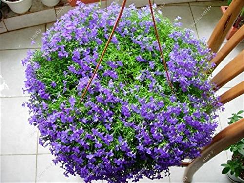 Bleu Fleur de Lin Graine vivace Fleur Graine Quatre Saisons Fleur plantes ornementales tropicales en plein air Bonsai Lin Semilla 100 Pcs