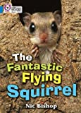The Fantastic Flying Squirrel: Band 04/Blue (Collins Big Cat)