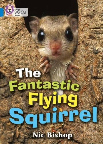 The Fantastic Flying Squirrel: An information book about a flying squirrel with beautiful photographs. (Collins Big Cat)