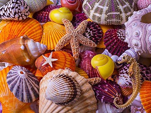 Sea Shell Schätze Jigsaw Puzzle 550 Teile