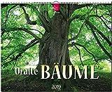 GF-Kalender Uralte Bäume 2019