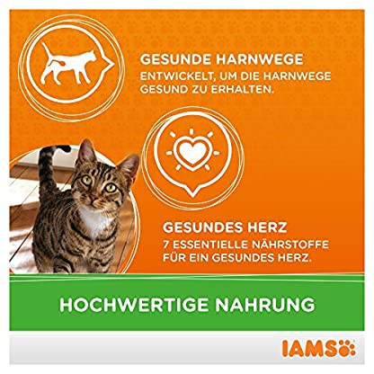 IAMS Adult Cat Lamb 4