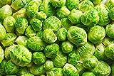 """Cavoletti di Bruxelles""""Long Island"""" - dozzine di teste da una pianta - 320 semi"""