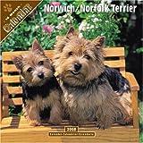 Norwich/Norfolk Terrier