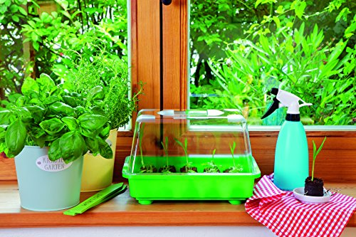 Dominik Blumen und Pflanzen, Anzuchtsets Romberg Kleines Zimmergewächshaus Nino extra stabil mit Belüftung, mehrfarbig