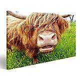 Bild Bilder auf Leinwand Close up Kauende Highland Kuh auf Einer grünen Wiese Wandbild Leinwandbild Poster