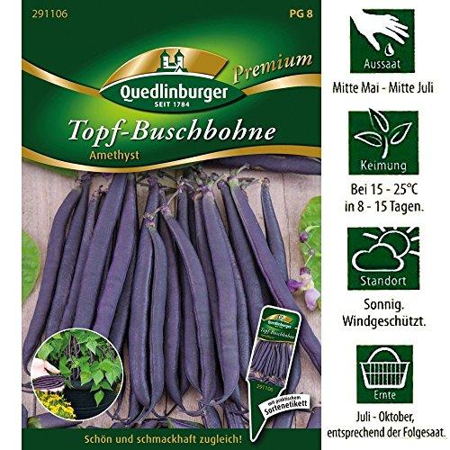 Quedlinburger Topf Buschbohnen Lila Sorte Amethyst Premium Saatgut / Ernte Juli bis Oktober / mit Sortenetikett (Lila Bohne Samen)