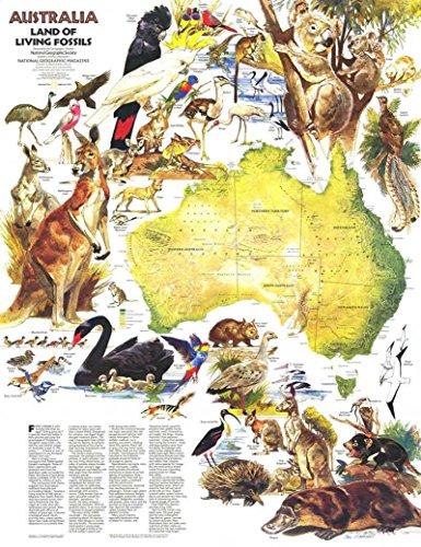 Reproduktion eines Poster Präsentation-Australien Land of Living Fossils (1979)-61x 81,3cm Poster Prints Online kaufen