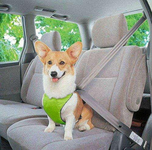 EnGive Hund Auto Sicherheitsgurt sicherheitsgeschirr Autogurt (Green, S)