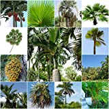 Palmen Mix - 11 Palmen Arten - je 10 Samen -sortenrein verpackt !