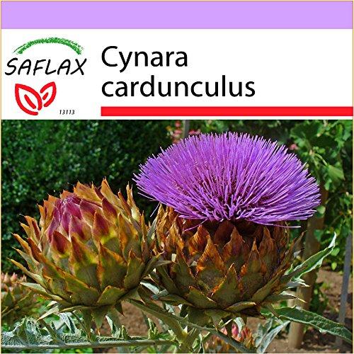 SAFLAX - Cardo - 50 semi - Cynara cardunculus