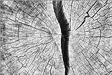 Posterlounge Leinwandbild 180 x 120 cm: Gespaltene Baumscheibe von Editors Choice - fertiges Wandbild, Bild auf Keilrahmen, Fertigbild auf echter Leinwand, Leinwanddruck
