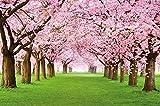 Papel pintado fotográfico que muestra un bosque con cerezos ? imagen mural y papel pintado de la primavera de color rosa ? decoración mural de arboles