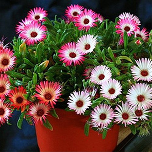 Flower Seeds : Pebble Plant Flower Seeds Pot - Garden Flower Seeds Pack by Creative Farmer  available at amazon for Rs.99