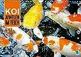 Koi: Juwelen im Teich (Wandkalender 2019 DIN A4 quer): Kois: Schöne Statussymbole (Monatskalender, 14 Seiten ) (CALVENDO Tiere)