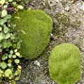 shiningup Simulation Moos Stein Garten Miniatur-Craft Micro Landschaft Dekorationen von Shiningup - Du und dein Garten