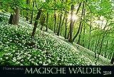 Magische Wälder 2019: Großer Foto-Wandkalender mit Bildern aus bunten Wäldern. Edler schwarzer Hintergrund und Foliendeckblatt. PhotoArt Panorama Querformat: 58x39 cm.