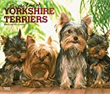 For the Love of Yorkshire Terriers 2019 Calendar