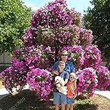 Las semillas de la petunia 50pcs rara exótica planta perenne de la petunia semillas de flores del árbol de los bonsais por plantas del jardín envío libre del amarillo
