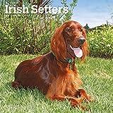 Irish Setters - Irish Setter 2019 - 18-Monatskalender mit freier DogDays-App (Wall-Kalender)