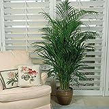 #6: Parlor Palm Tree Seeds