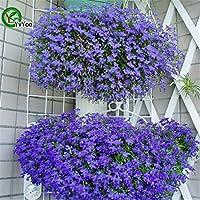 100 PCS Ranunculus Asiático Semillas de flores para el hogar y jardín Plantas de bricolaje ranúnculo persa semilla de flor Bulbos