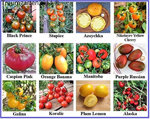 Tomatensamen Sortiment, 12 seltene alte Sorten, samenfest und Kältetolerant, für kurzen und kühleren Sommer gut geeignet - Gezüchtet 12