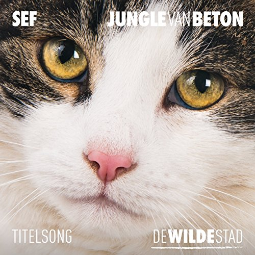Jungle Van Beton (Titelsong