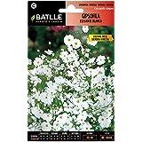 Semillas de Flores - Gipsofila elegante blanca - Batlle