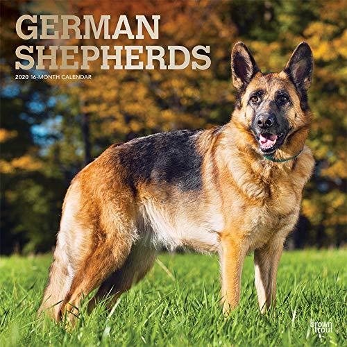 German Shepherds - Deutsche Schäferhunde 2020 - 16-Monatskalender mit freier DogDays-App: Original BrownTrout-Kalender [Mehrsprachig] [Kalender] (Wall-Kalender)