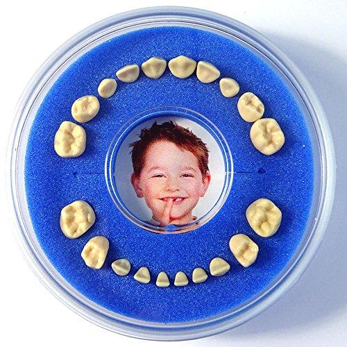 Scatolina per Denti da Latte Firsty Round (Blu, Ragazzo)